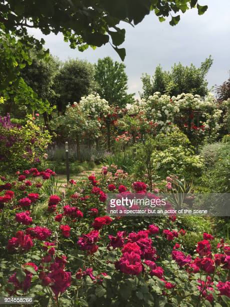 garden and red roses - red roses garden stock pictures, royalty-free photos & images