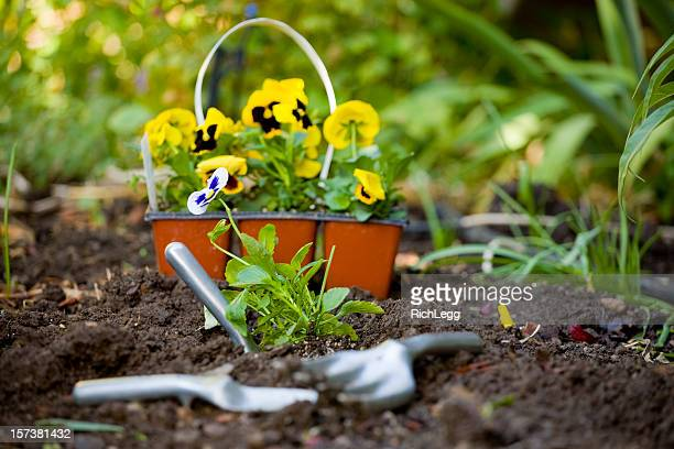 garden and tools - rich_legg stock photos and pictures
