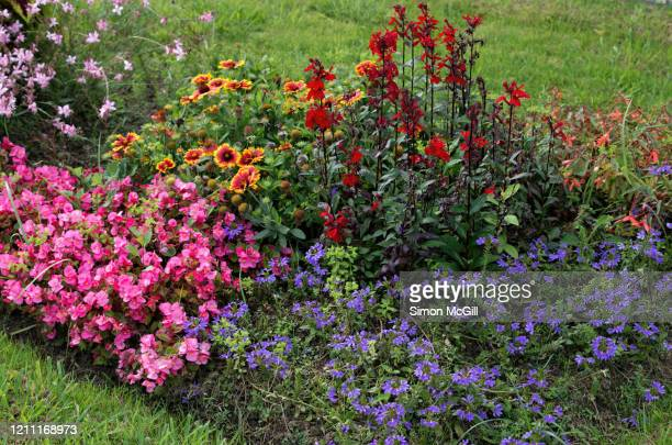 garden bed in bloom in a public park - begonia stock pictures, royalty-free photos & images
