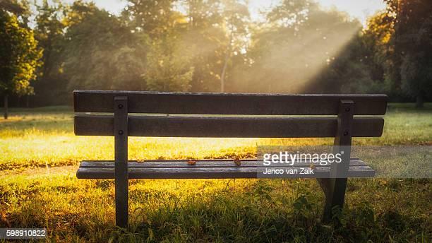 Garden bench and sunrays