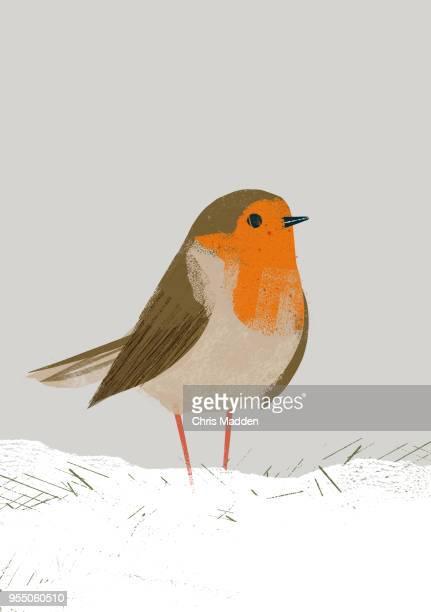 Garden Bird: Robin