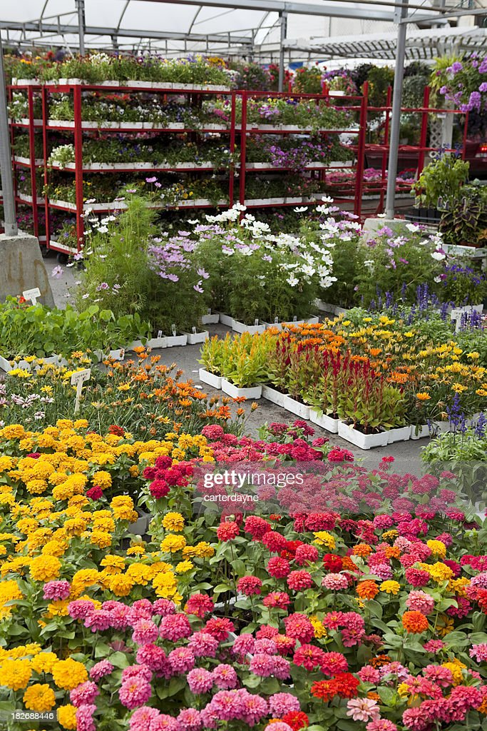 Garden Center And Plant Nursery With Flowers For Spring Gardening Stock Photo