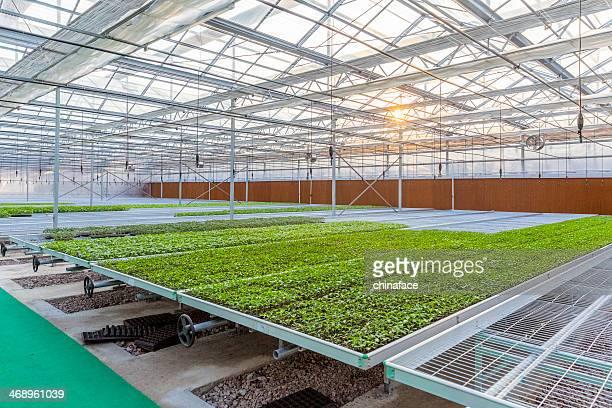 "Garden Center ""Greenhouse"""