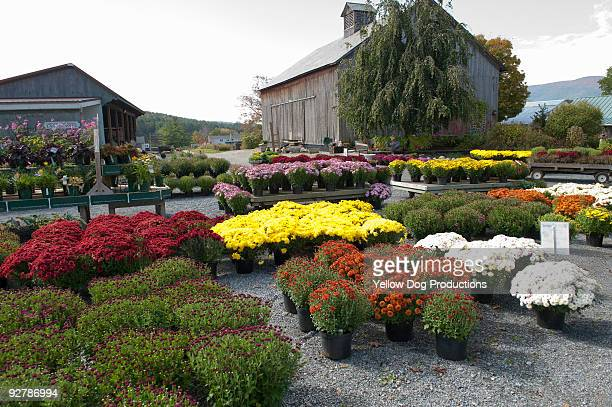 Garden Center in the Autumn
