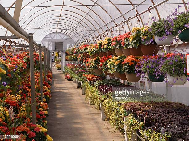 Garden Center Nursery Greenhouse with Potted Flower Plants Retail Display
