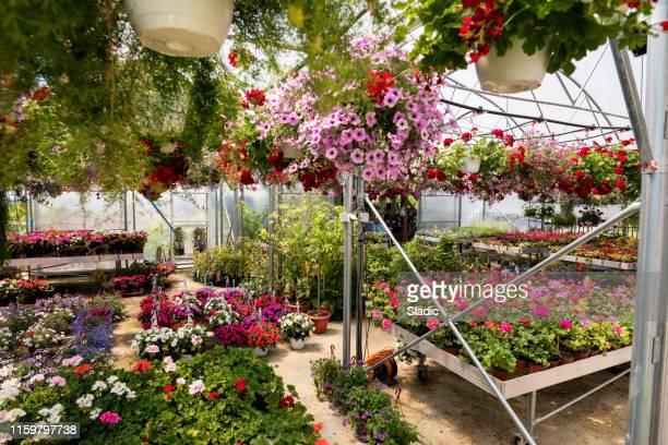 ガーデンセンター - 植物園 ストックフォトと画像