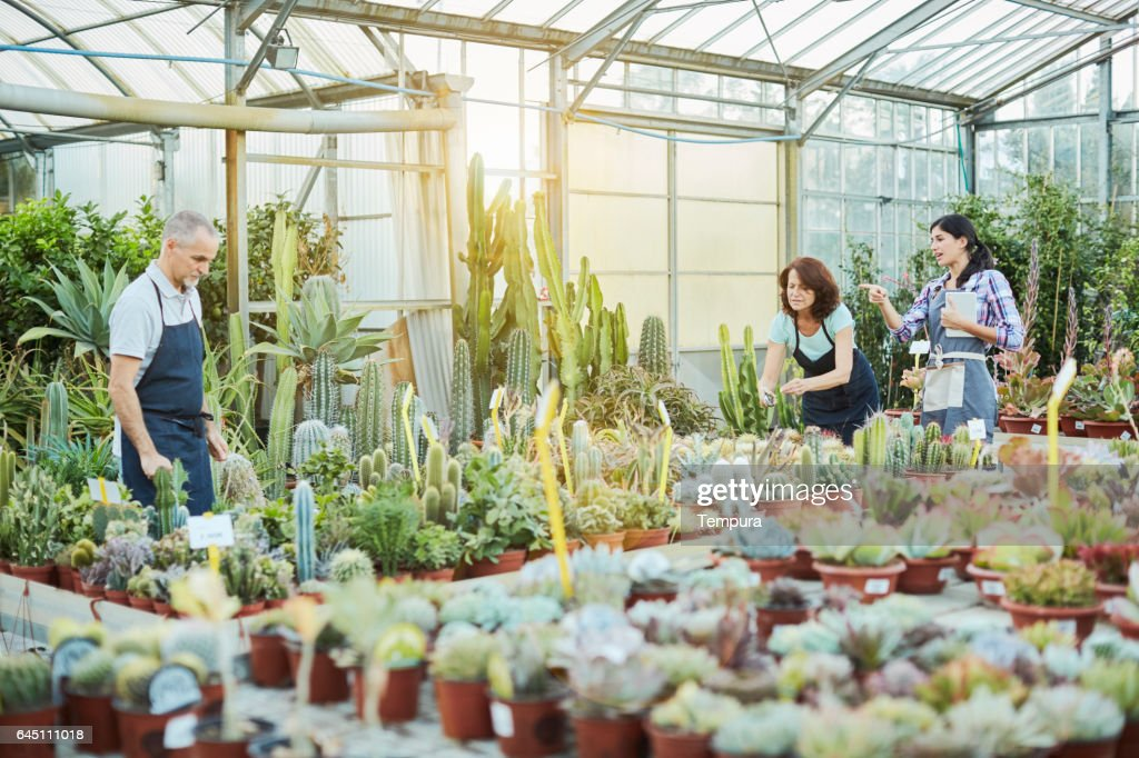 Garden center workers taking care of the plants. : Stock Photo