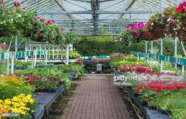 Garden centre with flowers and hanging baskets