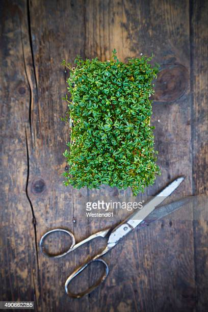 Garden cress and scissors on wooden table, elevated view