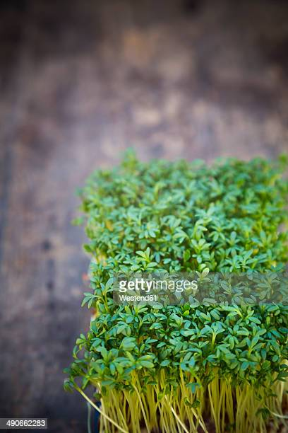 Garden cress on wooden table, close-up