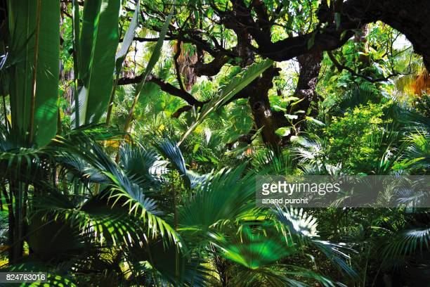 garden decor like tropical rain forest pattern - tropical rainforest stock pictures, royalty-free photos & images