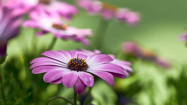 Garden Detailed Flower