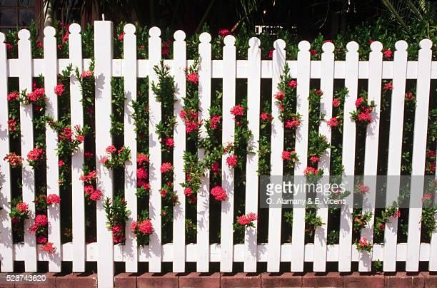 garden fence with orange flowers - cercado com estacas - fotografias e filmes do acervo