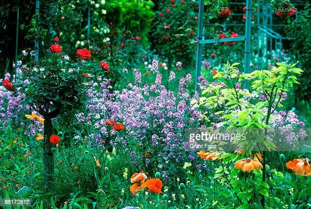 Garden flower beds, Giverney, France.