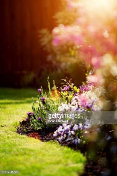 Garden flowerbed sunshine
