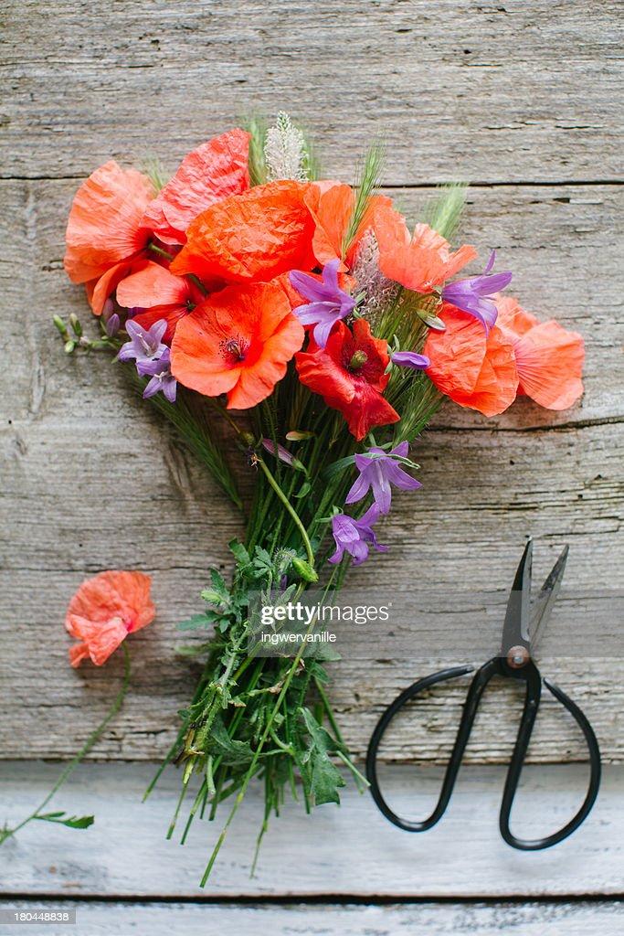 Garden flowers : Stock Photo