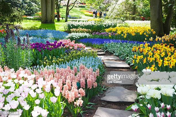 garden flowers # 53 xxxl - keukenhof gardens stock pictures, royalty-free photos & images