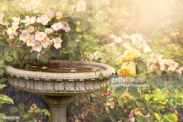 Garden font with roses
