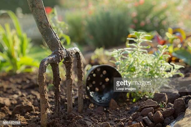Garden fork in a flower bed.