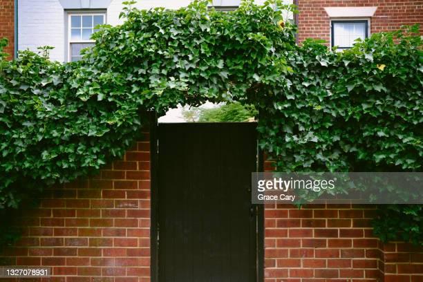 garden gate with ivy arch - バージニア州 アレクサンドリア ストックフォトと画像