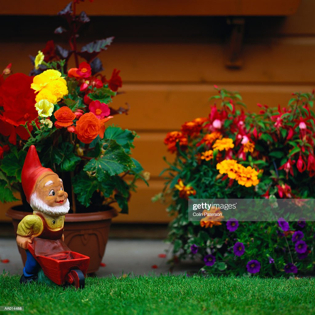 Garden Gnome In A Garden Stock Photo | Getty Images