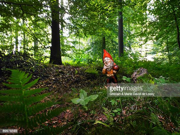 a garden gnome in the woods - garden gnome stock photos and pictures