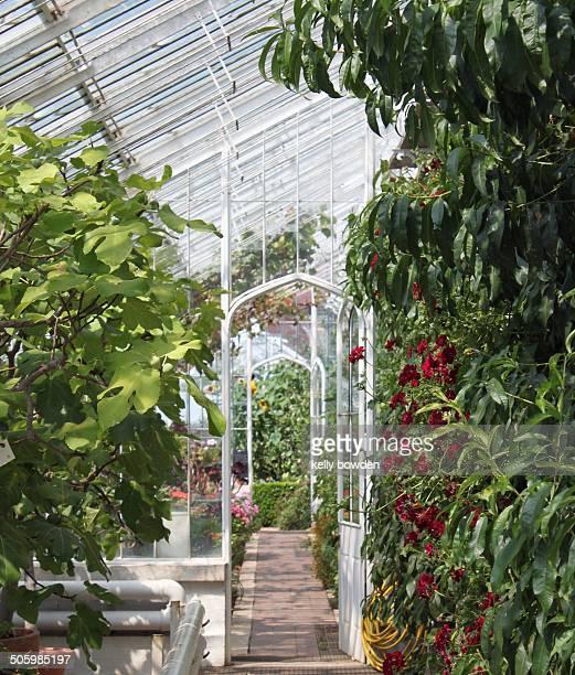 Garden greenhouse beauty wonder