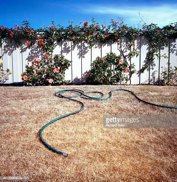 Garden hose on dry grass