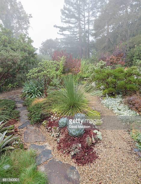 Garden in fog with redwoods