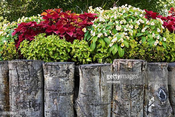 garden in raised bed with log retaining wall - retaining wall stock pictures, royalty-free photos & images