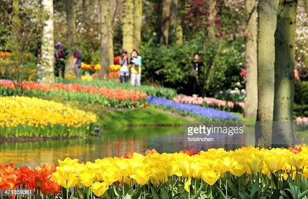 jardin de printemps - jardins de keukenhof photos et images de collection