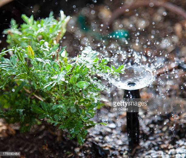 garden irrigation - sprinkler system stock pictures, royalty-free photos & images