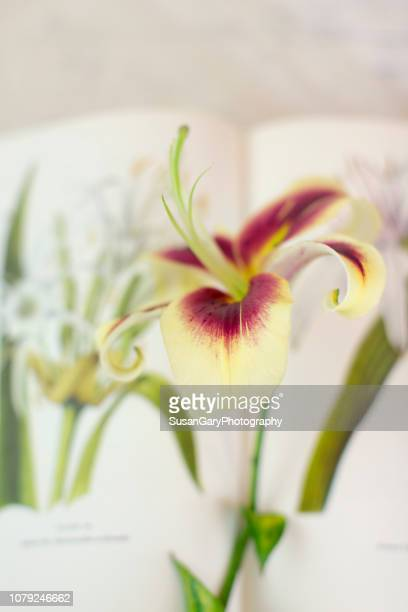Garden Lily with Floral Illustration