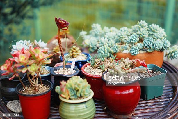 Garden of cactus flowers