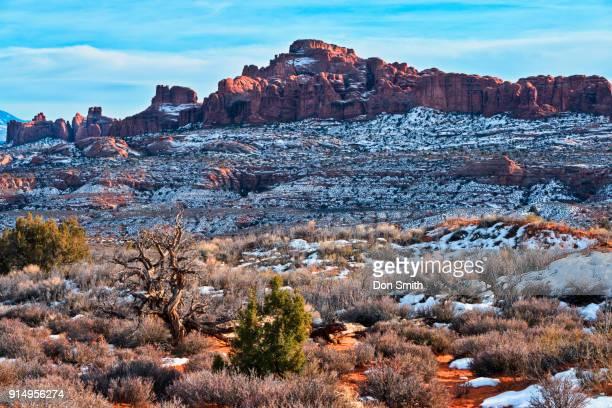 garden of eden and snowy desert - don smith foto e immagini stock