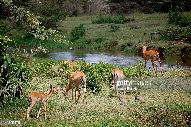 Garden of Eden in Africa