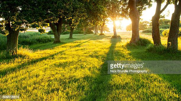 garden of eden - deciduous tree stock pictures, royalty-free photos & images