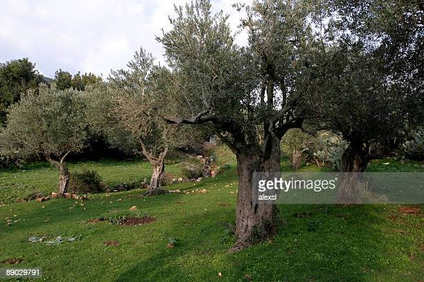 993 Garden Of Gethsemane Photos And Premium High Res Pictures Getty Images