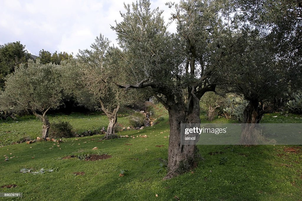 Delightful Garden Of Gethsemane Ideas