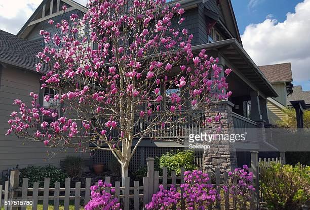 Frühling Garten und Magnolien und Kamelien