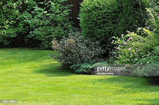 garden - bush stock pictures, royalty-free photos & images