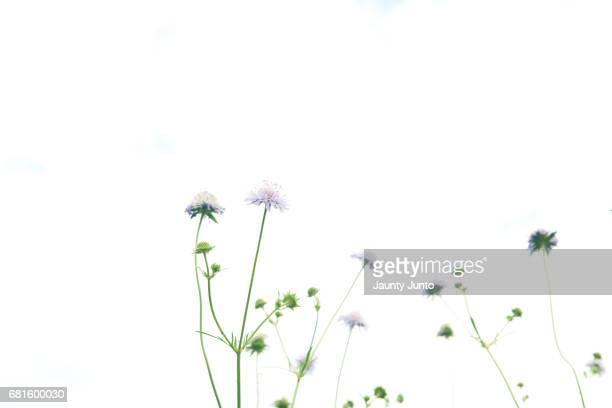 garden - 小さい ストックフォトと画像