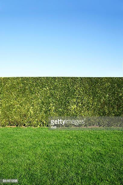garden - hedge stock pictures, royalty-free photos & images