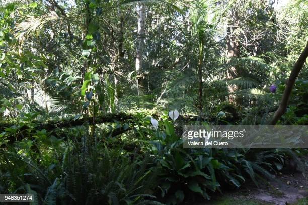 garden - sem fim... valéria del cueto stock pictures, royalty-free photos & images