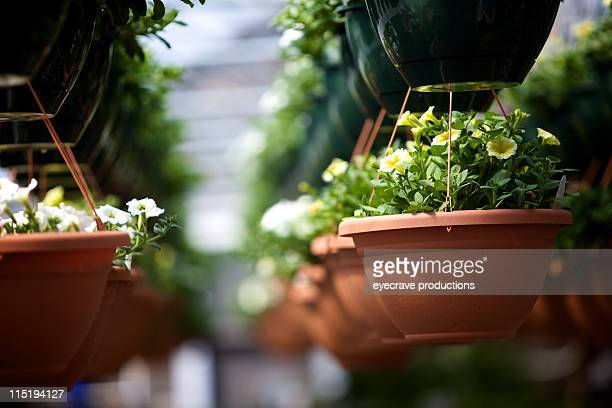 garden plant nursery - eyecrave stock pictures, royalty-free photos & images