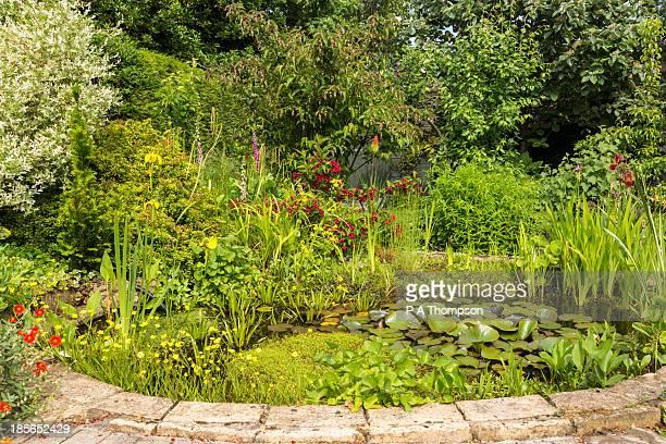 Garden pond in Summer