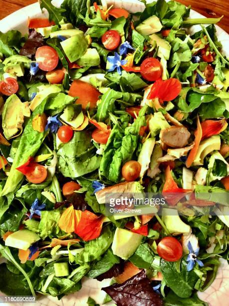 garden salad - salad stock pictures, royalty-free photos & images