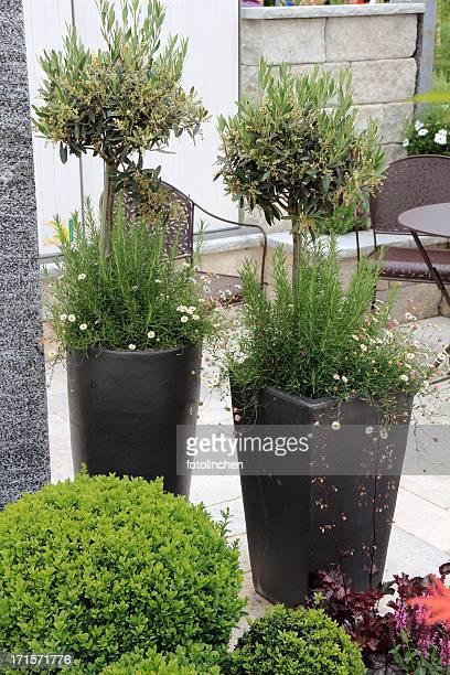 Garten-Atmosphäre