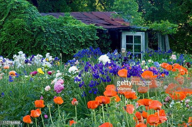 garden shed - ogphoto stock pictures, royalty-free photos & images
