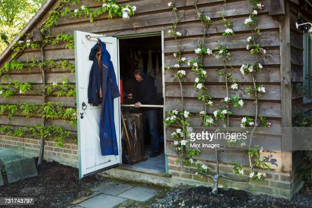 A garden shed workshop with plants trained up the outside, flowering. View through the open door of a man at work.